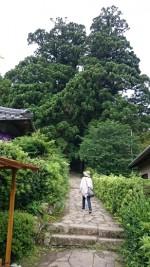 大門坂駐車場から熊野那智大社まで・・・