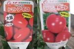 わき芽を挿し木に「トマト」'13