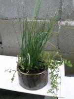 石臼に水生植物の寄せ植え鉢「メダカの住まい」2